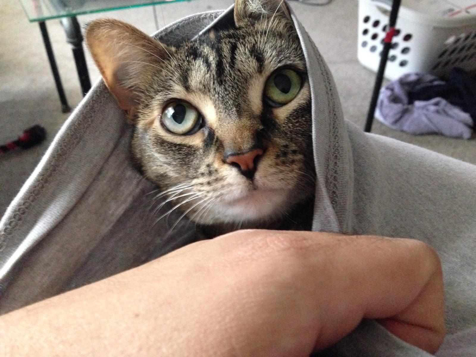 7 Times I Felt Like My Cat Was Judging Me Mogul